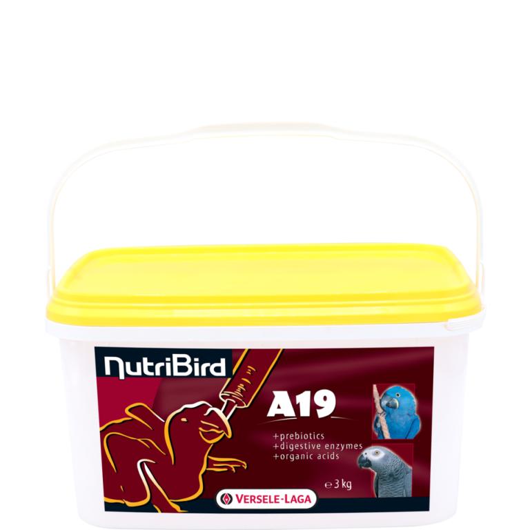 A19-3kg
