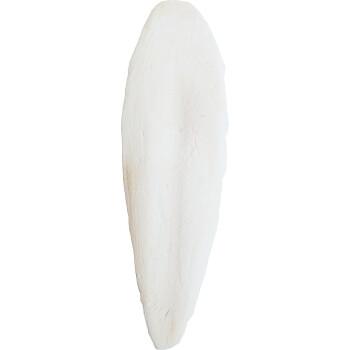 Sepiova-kost-1